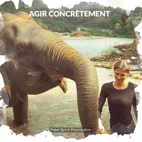 réserve naturel pour éléphants en Thaïlande