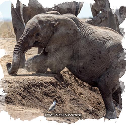 Refuge d'éléphants en Afrique Kenya