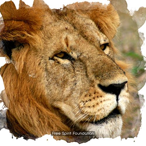 Réserve de lions