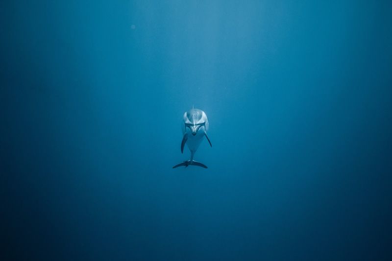 O'dyssey Marine conservation program created by the Free Spirit foundation - ocean pollution