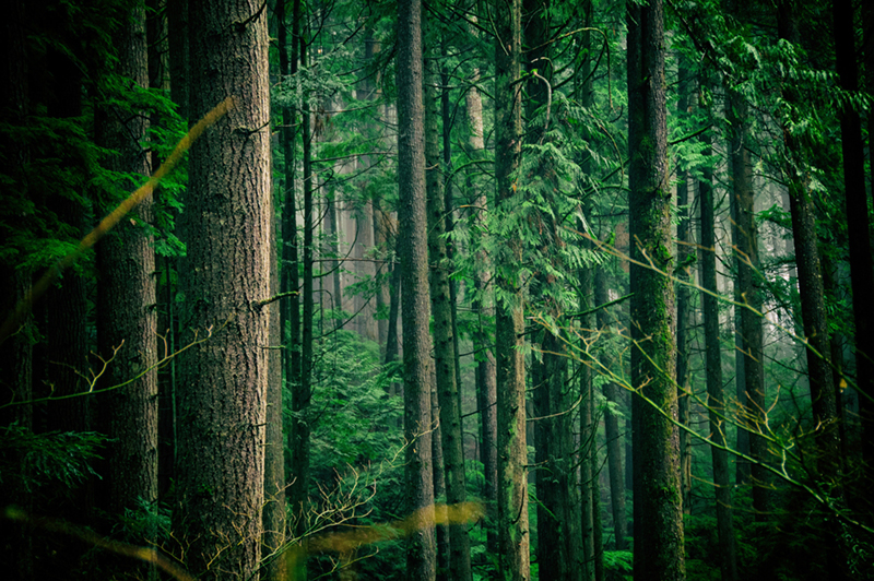 RE-GREEN THE PLANET a reforestation program created by Free Spirit foundation - planting trees to save our future